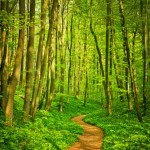 Finding the way to relief calmness and restoration
