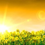 summertime-field-of-flowers-and-sunset