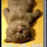 Relaxing Kitten picture