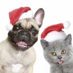 funny-christmas